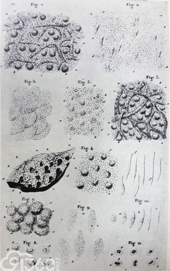 细胞系统简笔画