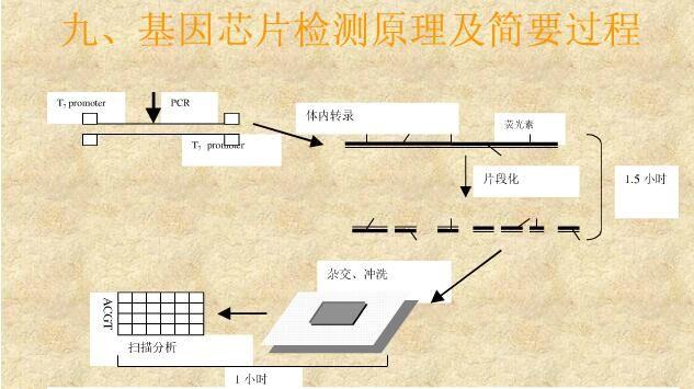 基因芯片技术简介