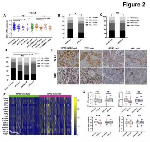 TP53/KRAS突变迎来免疫治疗新曙光